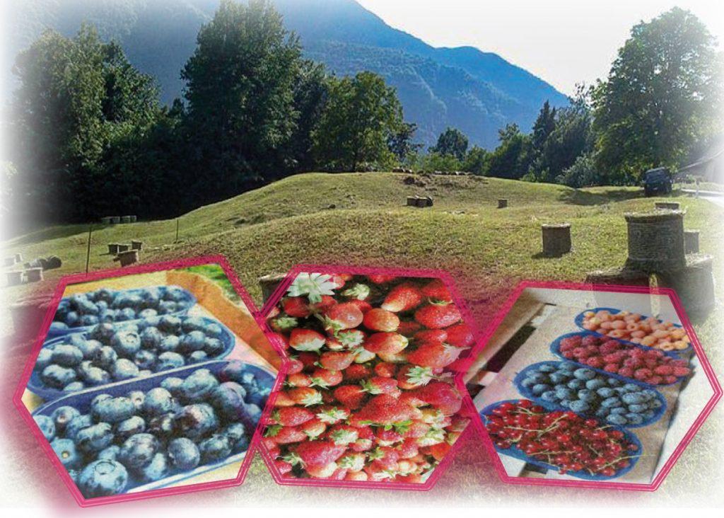 L'azienda e' alle pendici del Monte Cancervo, in una frazione di San Giovanni Bianco (mezz'ora da Bergamo) immersa nella natura.